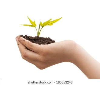 Boy hands holding young plant isolated on a white. Ecology concept