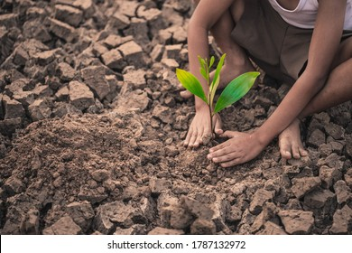 Boy hands are planting the seedlings into the arid soil.   Seedlings are growing from arid soil .concept of global warming.