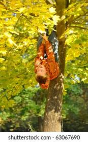 Boy hang on tree in autumn