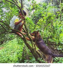 A boy and his dog climb the tree