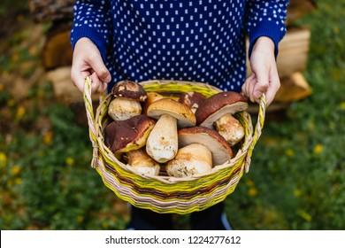 Boy holding dasket with fresh mushrooms