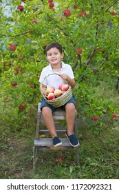 Boy holds basket with apples