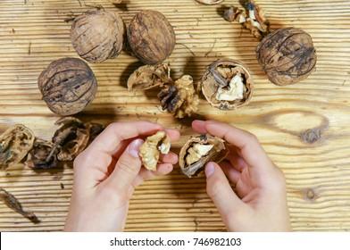 Boy holds big walnuts. Healthy food and snack