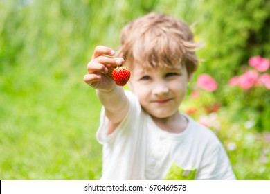 boy holds a strawberry in hands outdoors.
