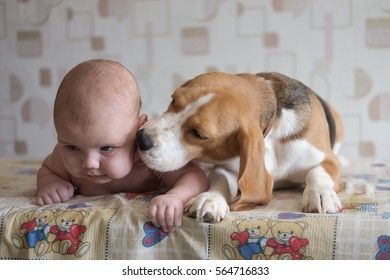 boy infants lying next to the Beagle