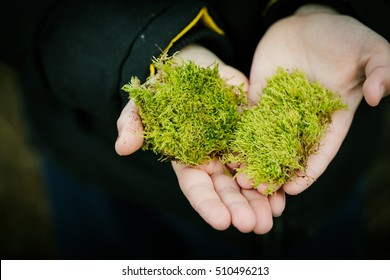 Boy keeps a green moss in his hands