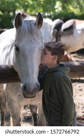 Boy kissing his white horse. Unconditional love.