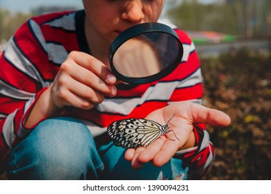 boy looking at butterfy, kids learning nature