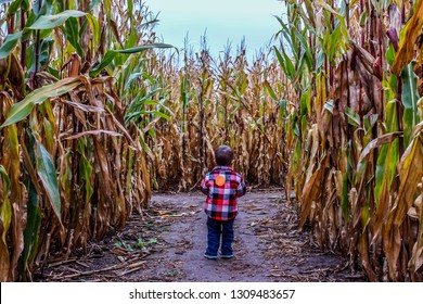 Boy lost in a spooky corn maze filled with autumn colors.  Halloween fun at a farm.