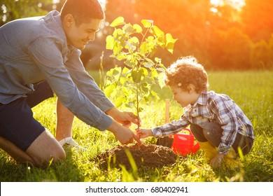Boy and man both wearing shirt planting tree seedling in park.