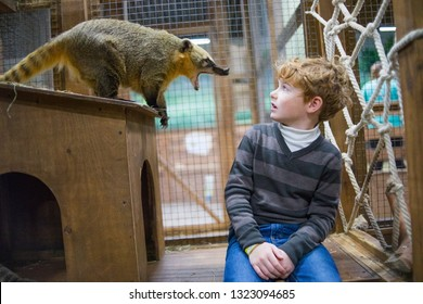 Boy and Nasua nasua. South American coati. Nasua nasua, also known as the ring-tailed coati. Wildlife anima
