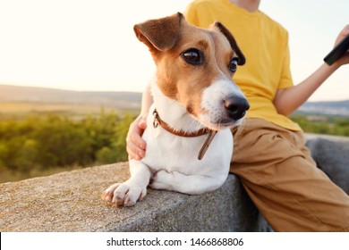 A boy in an orange t-shirt is sitting on an old cement fence with his dog of breed Jack Russell Terrier against the backdrop of the sunset of the orange sun and rays in a green field. Child with a dog