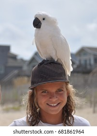 Boy with Parrot Perched on Head