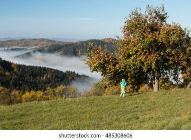 boy picking fresh red apples from big tree in orchard over the valley with beautiful view on colorful autumn  hills