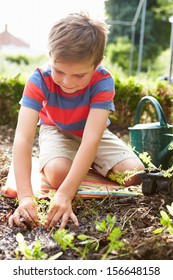Boy Planting Seedlings In Ground On Allotment
