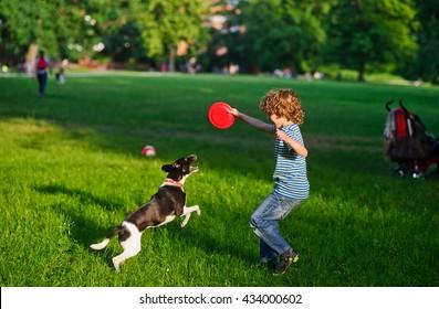 Der Junge spielt mit dem Hund auf einem Rasen. Der Junge hat eine Hand mit frisbee aufgezogen. Sein schöner brauner Hund wurde an den Hinterbeinen befestigt. Er versucht, dem Besitzer eine Scheibe wegzunehmen. Funny Game.