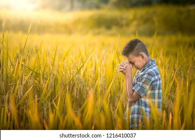 Boy praying in rice field.