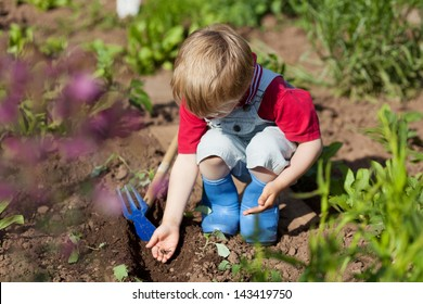 Boy is putting seeds in the soil in the vegetable garden