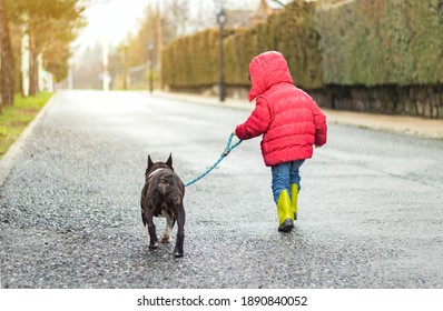 boy in red coat and bulldog dog tied to his leash running in the rain. background with vanishing point road. friendship Concept.