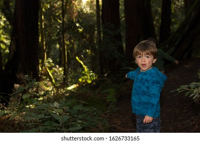 Boy in redwood forest with messy face