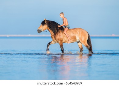 The boy riding a horse in the sea. Young rider on horse swim in water in sunset. Big horse with child walking on blue background.