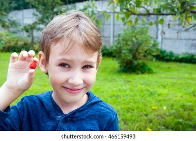 Boy showing freshly picked a red ripe strawberries.