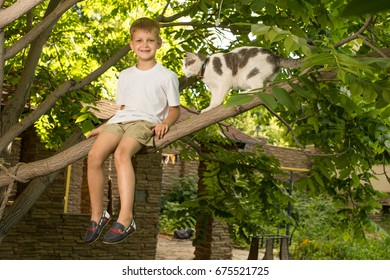 Boy sits on the tree branch with cat