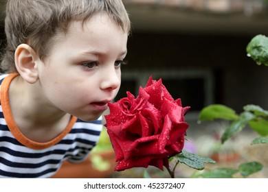 Boy smelling red rose in a garden