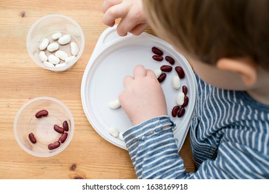 Boy sorting kidney beans from white  beans. Montessori concept.  Preschool implement for early education. Fine motoric skills and  attention training exercise. DIY kid play at home concept.