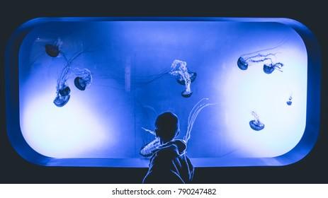 A boy staring at a tank full of jellyfish at an aquarium