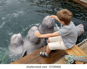 The boy stroke the dolphins who are jumping out of water
