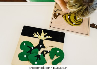 Boy students Child's hands learning biology with montessori material