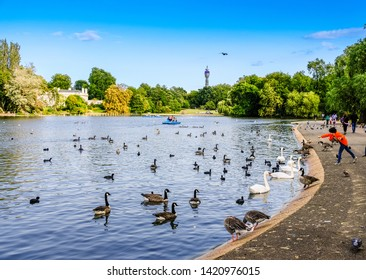 Boy throwing food to swans and ducks swimming in pond in park in London, England, at sunset; boats and trees in background