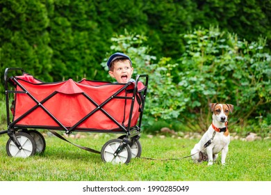 boy in a wagon and adult male jack russell terrier dog on a grass in a garden in spring
