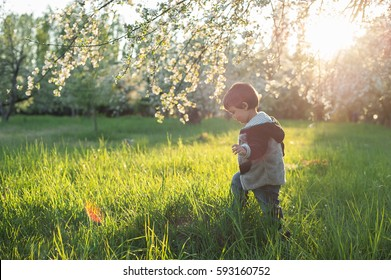 boy walking in blooming apple tree flowers at spring. Sunset