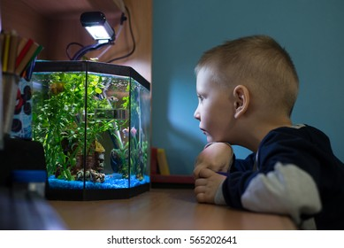 Boy is watching fish tank in his room, best pets for kids