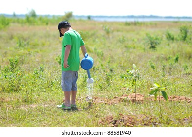 A boy watering small tree.