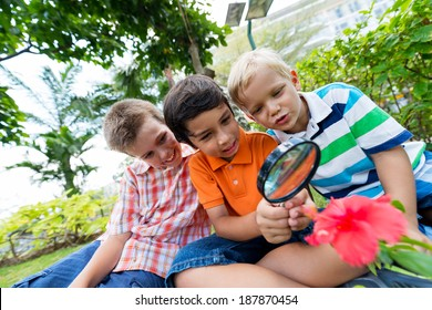 Boys looking at the flower with the magnifier