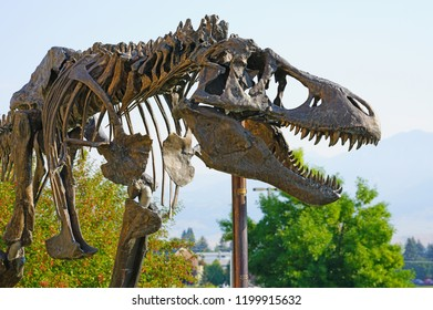 BOZEMAN, MT -7 SEP 2018- View of a Tyrannosaurus Rex dinosaur skeleton in front of the Museum of the Rockies, on the campus of Montana State University (MSU) in Bozeman.