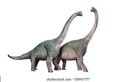Brachiosaurus altithorax couple (3d illustration isolated on white background)