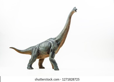 Brachiosaurus ,dinosaur on white background  .
