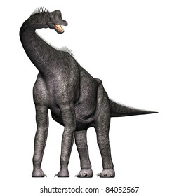 Brachiosaurus  Full body front view. Neck and head up. A genus of sauropod dinosaur from the Jurassic Morrison Formation of North America.  Isolated illustration. Clip art cutout