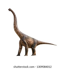 Brachiosaurus is a herbivore genus of sauropod dinosaur that lived in the Late Jurassic isolated on white background with clipping path