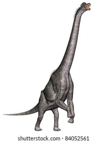 Brachiosaurus standing on hind legs reaching for veggitation.  is a genus of sauropod dinosaur from the Jurassic Morrison Formation of North America. Isolated illustration. Clip art cutout