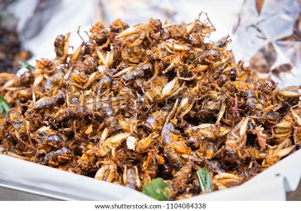 Brachytrupes portentosus, fried cricket as food