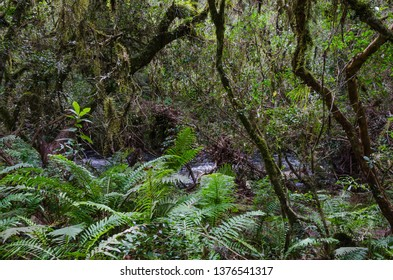 Bracken vegetation in the National Park of Aparados da Serra in the municipality of Cambará d
