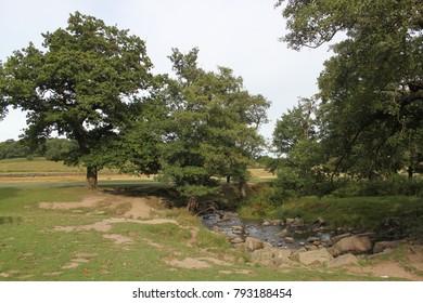 Bradgate park landscape, Leicestershire