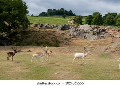 Bradgate Park, Leicestershire UK.