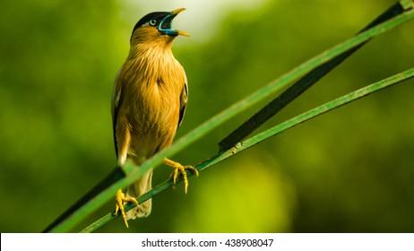 birds chirping images stock photos vectors shutterstock