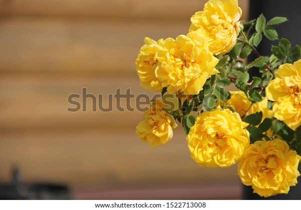 braided-yellow-rose-full-name-600w-15227